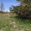 Vrstvená tráva