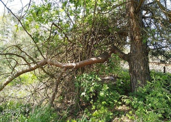 Posekání a kultivace zahrady, střih keřů, odstranění náletových dřevin, kompletní úklid + odvoz odpadu, řezání větví.