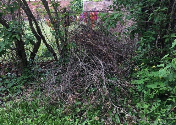 Stříhání živého plotu a odvoz větví ze zahrady – Plzeň