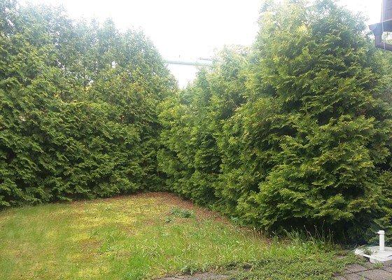 Radikální úprava živého plotu z thují