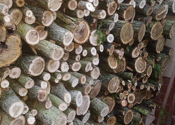 Kácení náletových stromů Praha Řeporyje