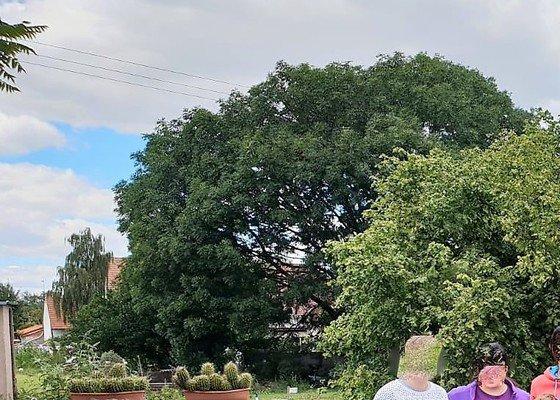Vyhodnocení a následný prořez velkého stromu
