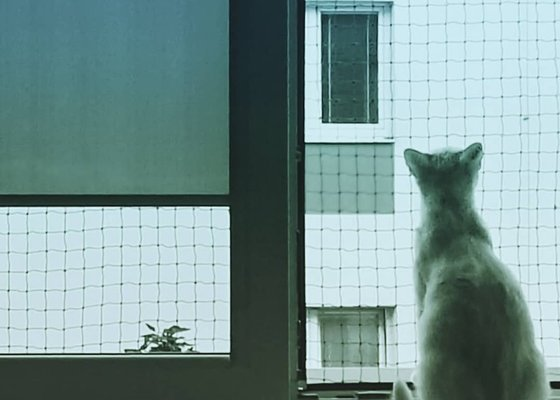 Zasíťování okna - kočka