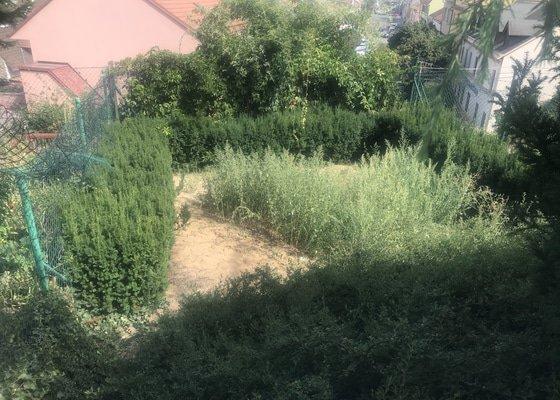 Údržba zahrady: řez okrasných keřů a odvoz odpadu