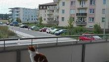 Síť pro kočky, balkon 18m2