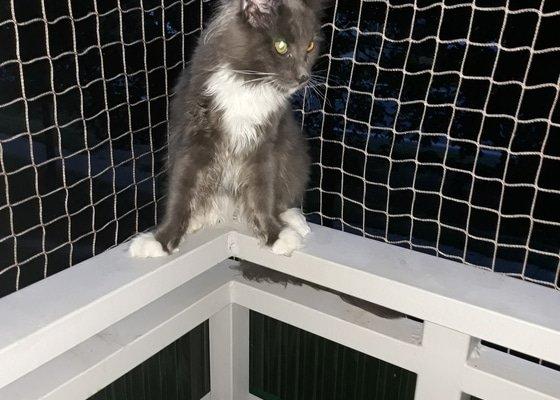 Síť na balkón pro kočky