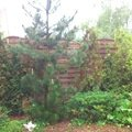 Opravy v dome a zahrade dsc 0363