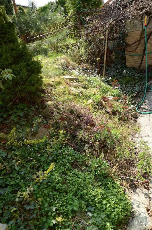 Revitalizace jezírka, skalky a záhonů v horní části zahrady: puvodni_stav_skalky_2