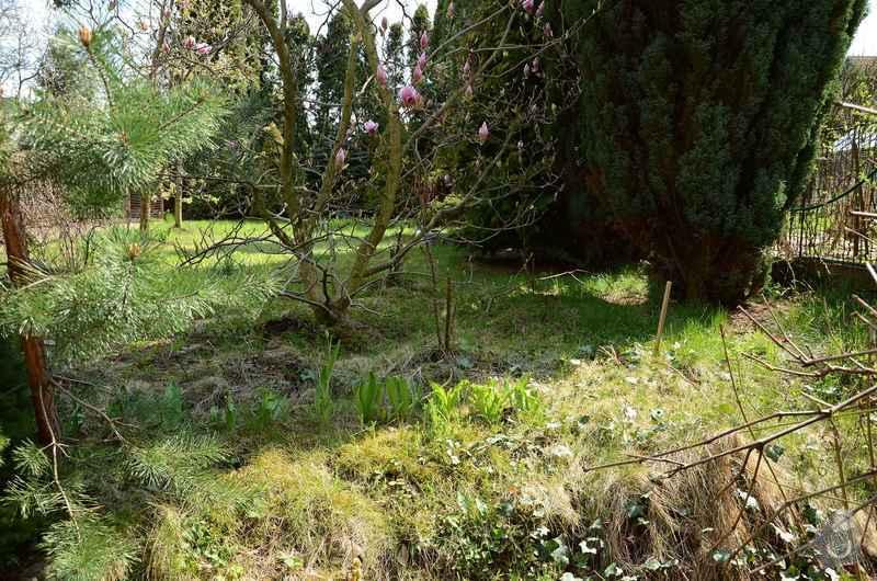 Revitalizace jezírka, skalky a záhonů v horní části zahrady: puvodni_stav_zahonu_nad_skalkou_1