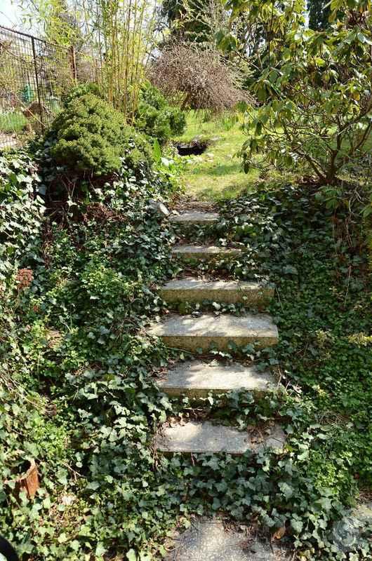 Revitalizace jezírka, skalky a záhonů v horní části zahrady: puvodni_stav_