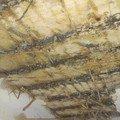 Odstraneni medu od les vcel z drevene podlahy med prosakuje s imag1907