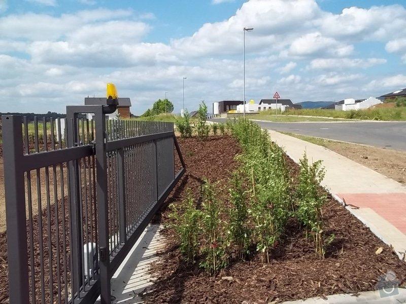 Výsadba živých plotů a zatravnění: 100_6113
