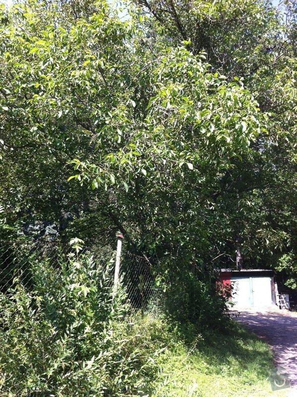 Kácení, prořez stromů: orech1