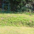 Uprava terenu svahu za domem img 3537