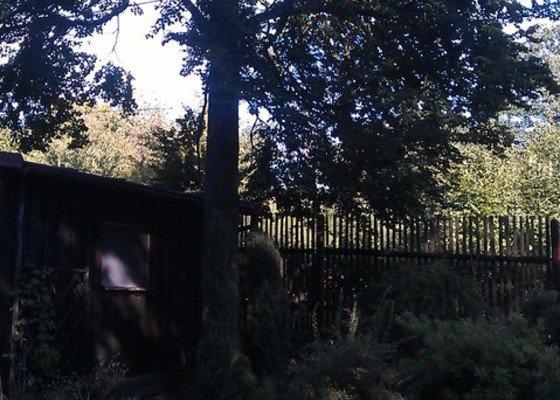 Kácení problematických stromů
