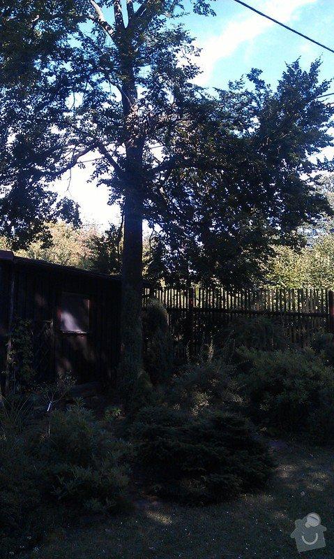 Kácení problematických stromů: 11_buk