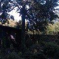 Kaceni problematickych stromu 11 buk