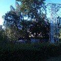 Kaceni problematickych stromu 12 buk