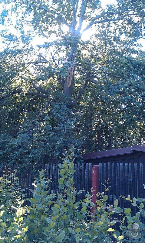 Kácení problematických stromů: 13_buk