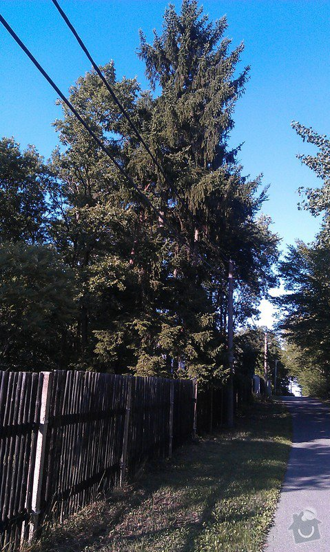 Kácení problematických stromů: 21_smrk