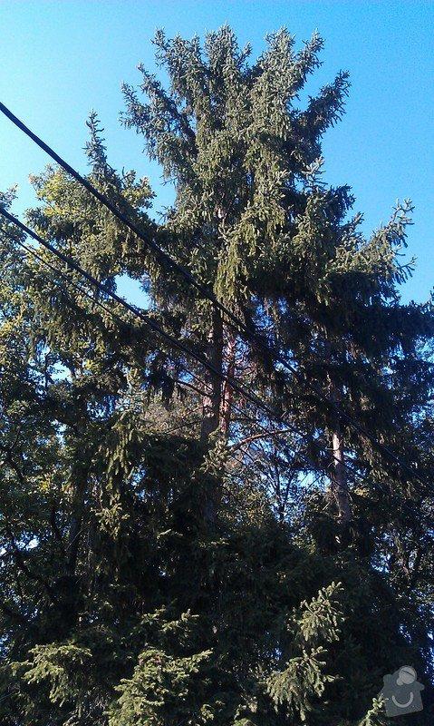 Kácení problematických stromů: 22_smrk