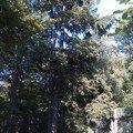 Kaceni problematickych stromu 25 smrk