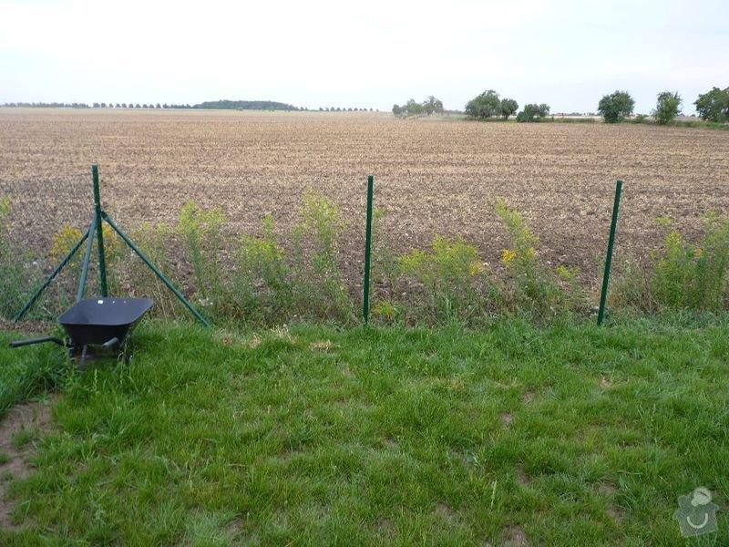 Operna zidka pod plot: image1001