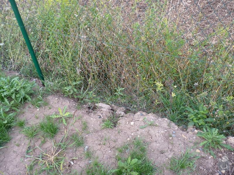 Operna zidka pod plot: image1003