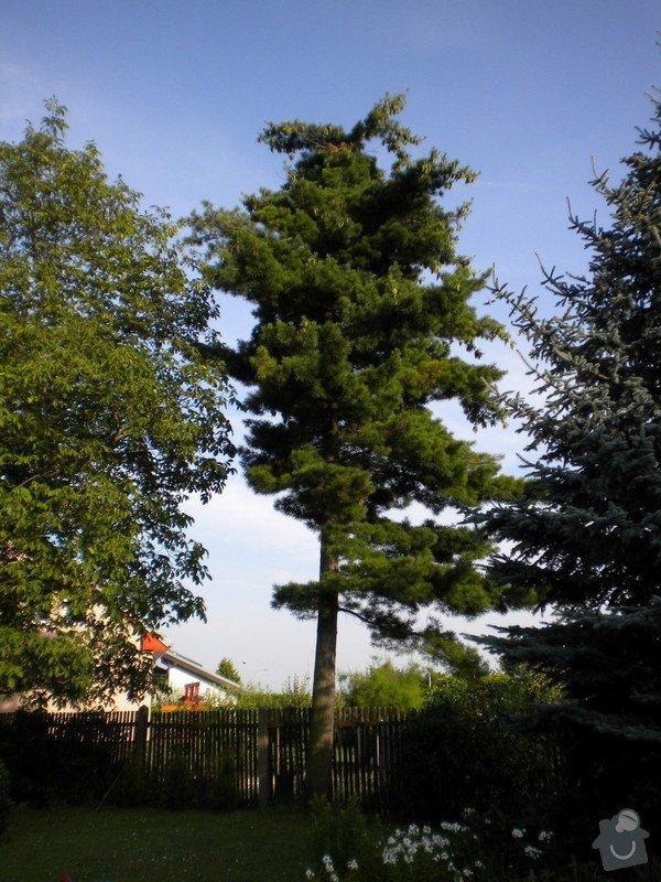 Pokácení stromů na vlastním pozemku: DSCN0062