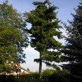 Pokaceni stromu na vlastnim pozemku dscn0062