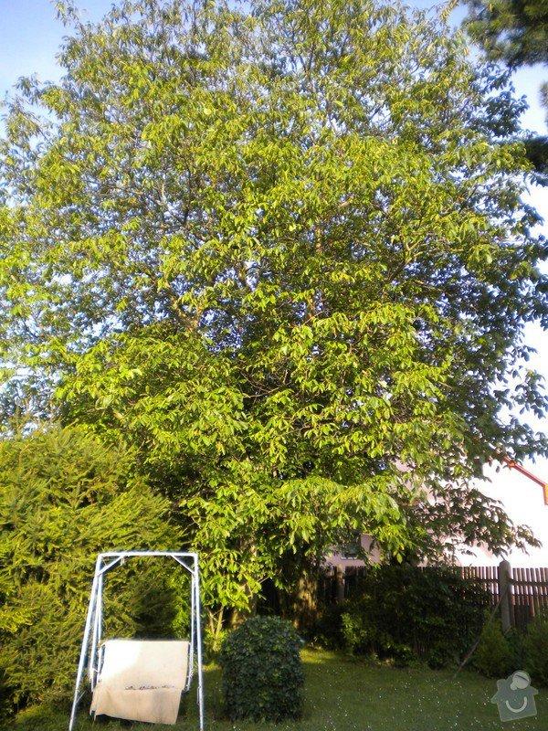 Pokácení stromů na vlastním pozemku: DSCN0063