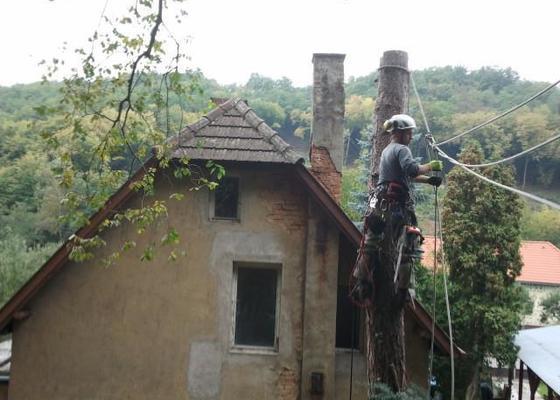 Posouzení stavu, prořezání, kácení stromů