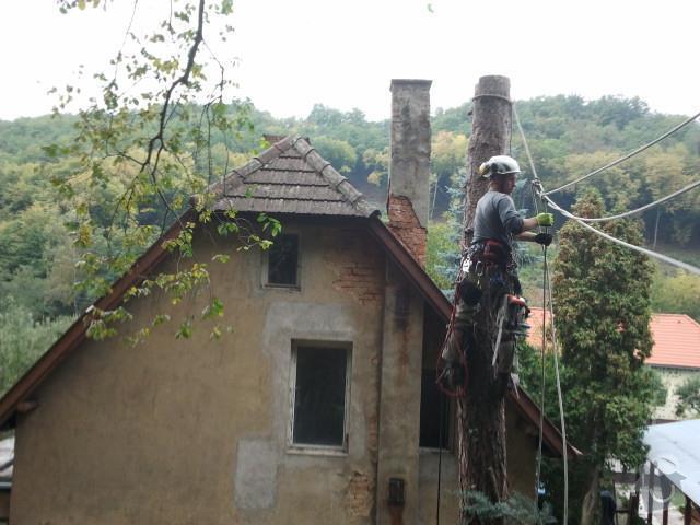 Posouzení stavu, prořezání, kácení stromů : rizikove_kaceni_borovice_stromolezeckou_technikou