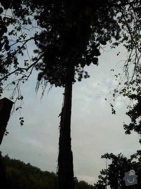 Posouzení stavu, prořezání, kácení stromů : borovice