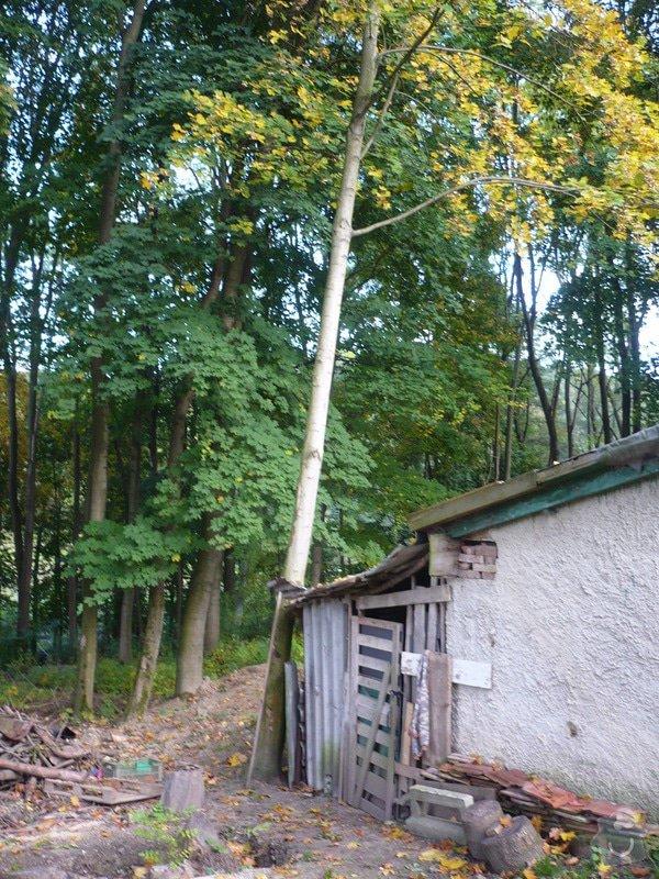 Pokacení stromu: P1020697