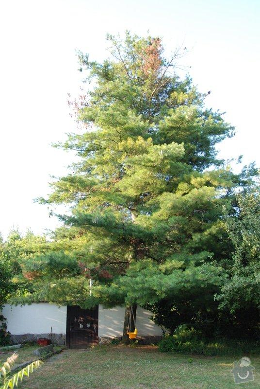 Ošetření borovice: DSC_0999