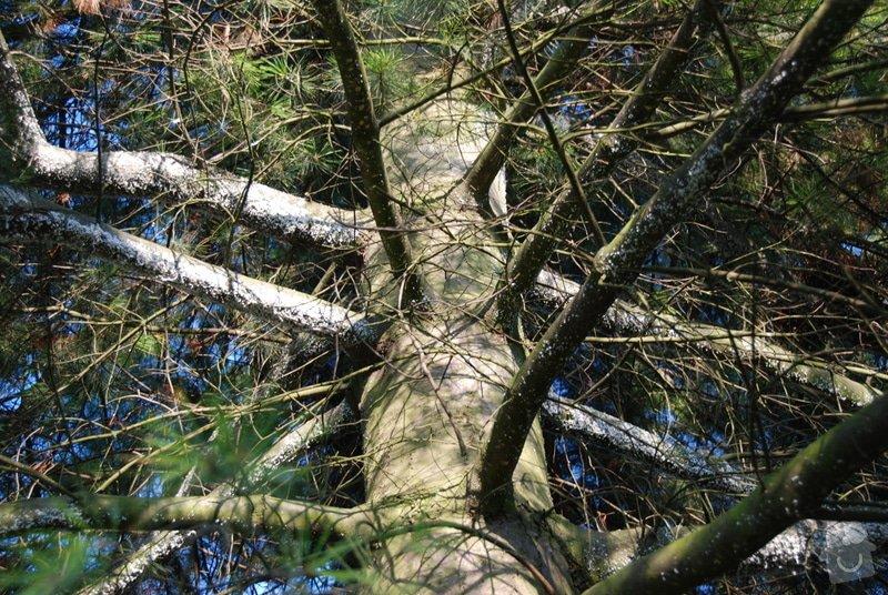 Ošetření borovice: DSC_0997