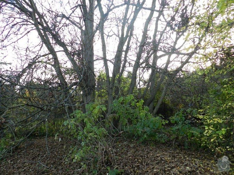 Poptávka - kácení stromu: Orech_-_dolni_cast