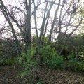 Poptavka kaceni stromu orech   dolni cast