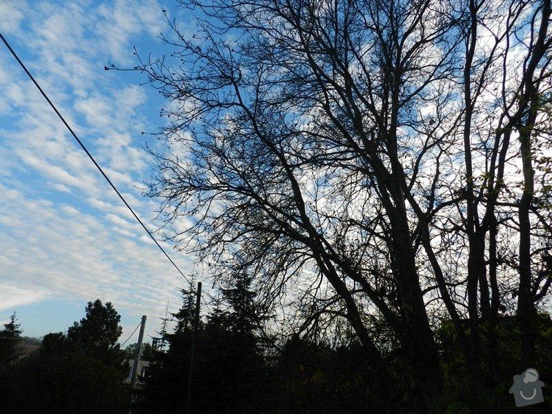 Poptávka - kácení stromu: orech_-_u_dratu