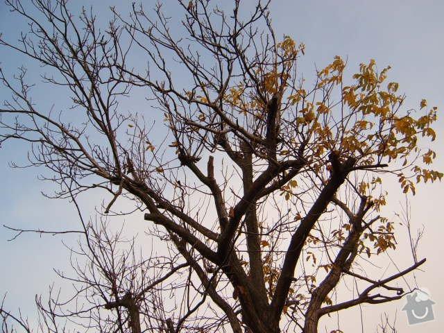 Pokácení ořechu: S4300377