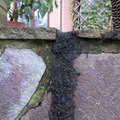 Okapnicku pod kamen na terase klempir spodni pohled