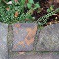 Okapnicku pod kamen na terase klempir vrchni pohled