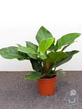 Rostliny v nádobách do interiéru: PhIgreen
