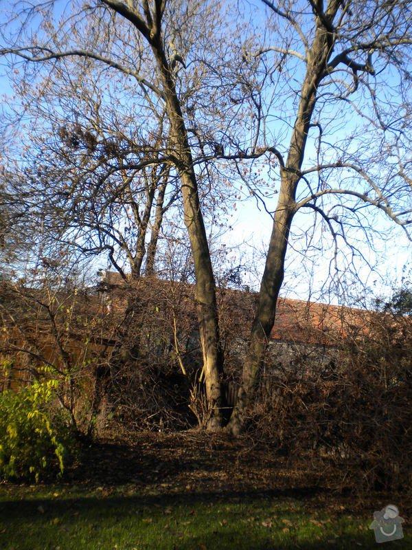 Kácení stromů: stromy_001