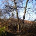 Kaceni stromu stromy 001