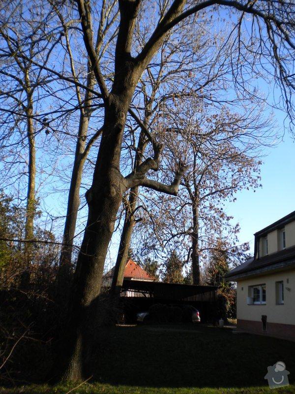 Kácení stromů: stromy_002