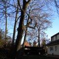Kaceni stromu stromy 002