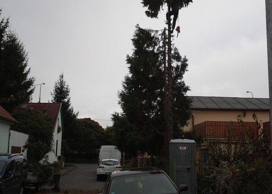 Kácení 10-15m vysokého stromu