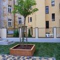 Polozeni travniho koberce a zahradni dlazby zahrada 440 m2 zahrada vnitrobloku ul.ovenecka 10